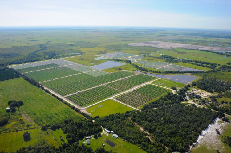 FPL, top Floridian utility, has plans to develop 2.1GW of solar by 2023, with solar outpacing coal and oil combined in its overall energy mix by 2020. Source: Doug Murray/Florida Power & Light
