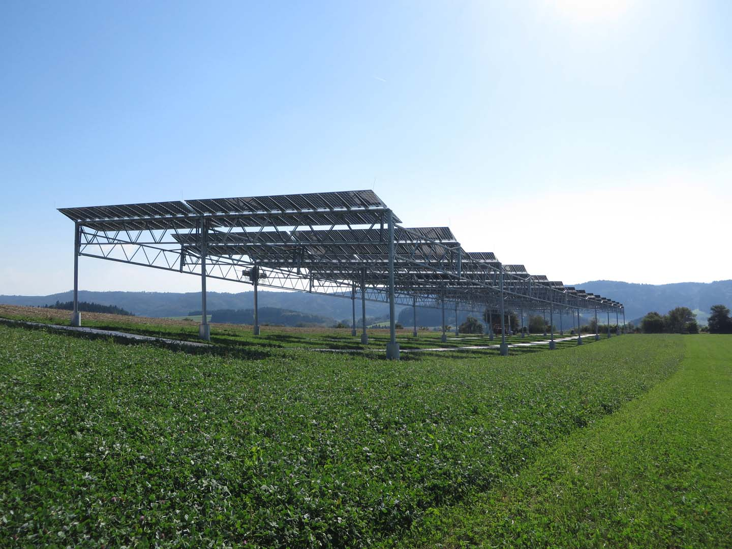 Winter wheat, potatoes, celeriac and clover grass were said to have been the first crops to be tested, using a south-west orientation of the APV system and extra distance between the five meter high rows of bifacial glass-glass PV modules to ensure that the crops were exposed to uniform solar radiation. Image: Fraunhofer ISE