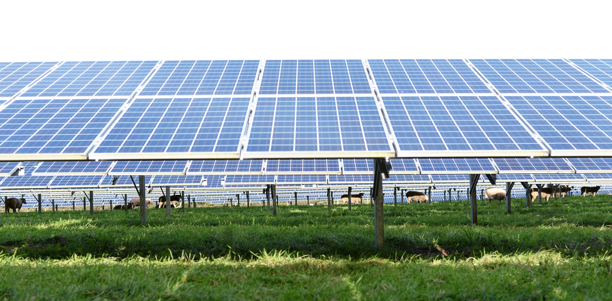 The initiative will support the development of PV solutions in portfolios of distributed and utility scale solar. Image: Image: BayWa r.e.