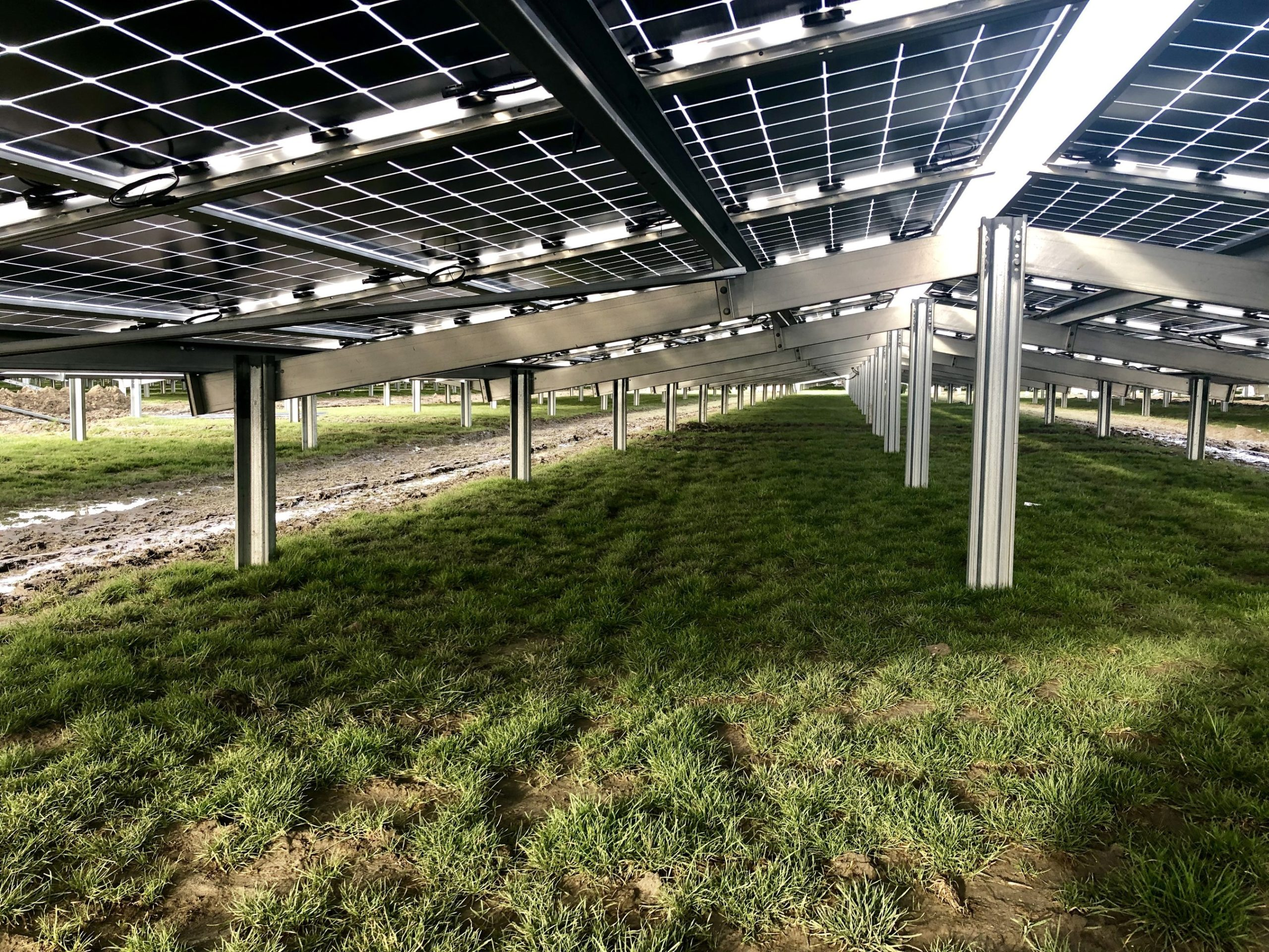 The Zonnepark Rilland PV project is claimed to be the largest utility-scale system built with N-type bifacial solar modules in Europe to date, utilising 40,000 modules in a novel canted (East-West) orientated, low-level mounting system. Image: Jolywood