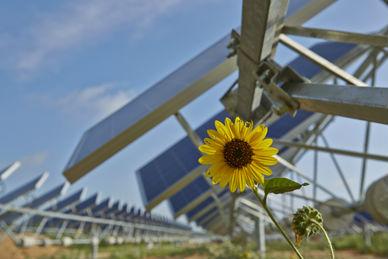 OCI has sold its 106MW (AC) Alamo 7 PV power plant for US$226.9 million to Con Edison Development.