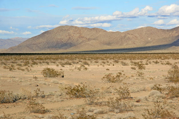 The project has been subject to a three year environmental analysis by the BLM. Credit: Bechtel