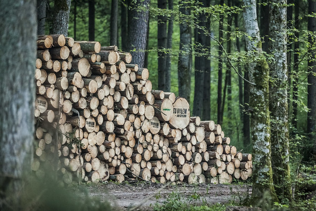 The Lyonsdale biomass-to-electricity plant once produced an average of 162,000 MWh per year using biomass material from logging operations and local sawmills. Credit: Flickr/Greenpeace Polska