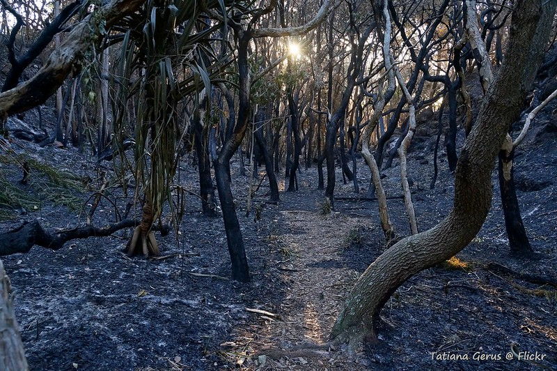 The morning after a bushfire south of Yamba in New South Wales. Credit: Tatters, Flickr