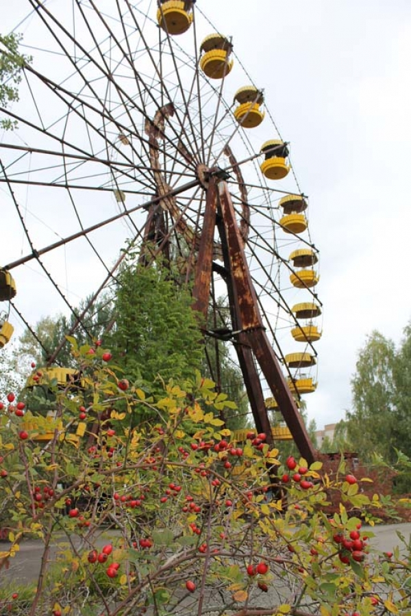 Wild fruit and berry trees are abundant throughout Pripyat, but their bounty is unsafe to eat.