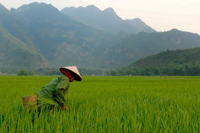 Emerging markets such as Vietnam will
