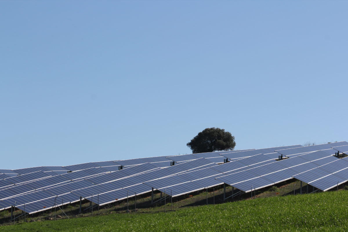 Solar project developer X-Elio was awarded 315MW of PV capacity in the auction. Image: 315MW.